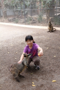 R feeding wallaby