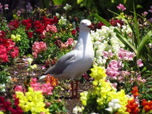 Seagull in flower bed